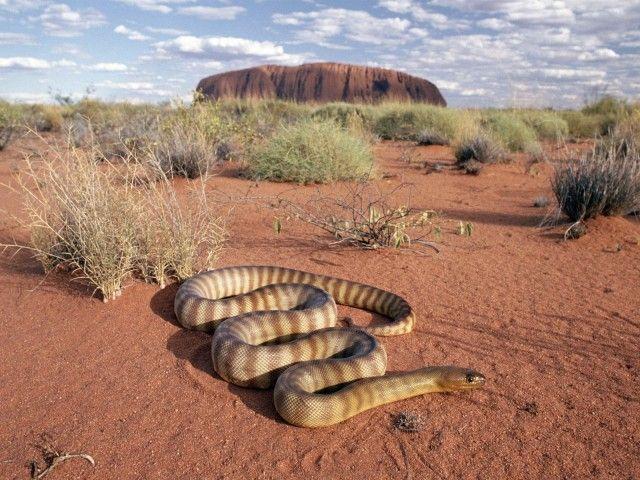 serpente do deserto
